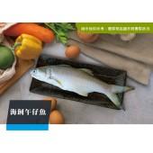 海飼午仔魚